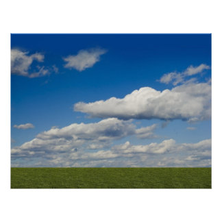 green filed, blue sky, white cloud poster