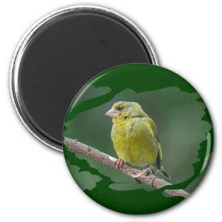 Green Finch - green finch - Verdier photo JL 2 Inch Round Magnet