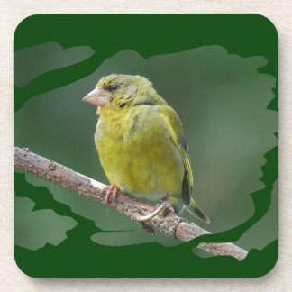 Green Finch - green finch - Verdier photo JL Coaster