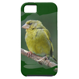 Green Finch - green finch - Verdier photo JL iPhone 5 Covers