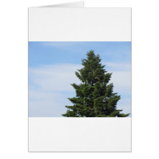 Green fir tree against a clear sky card