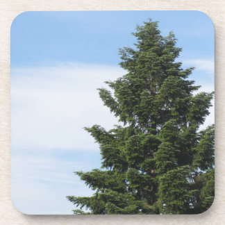 Green fir tree against a clear sky coaster