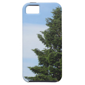 Green fir tree against a clear sky iPhone 5 covers