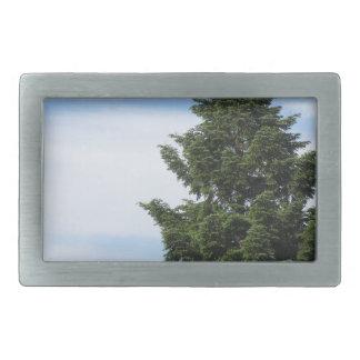 Green fir tree against a clear sky rectangular belt buckles