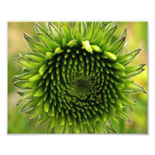Green Flower Photo Print