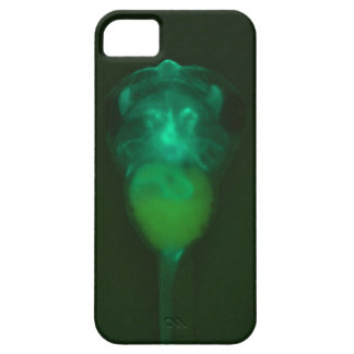 Green Fluorescent Tadpole iPhone  Case iPhone 5 Case