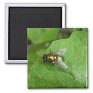 green fly square magnet