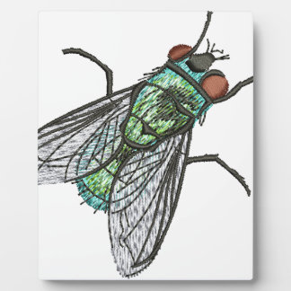 green fly plaque