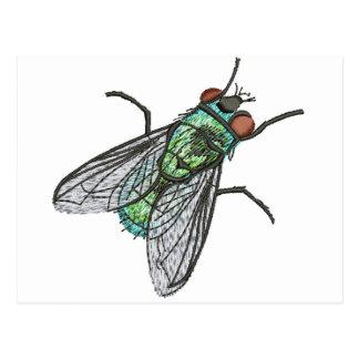 green fly postcard