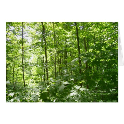 Green Forest Note Card