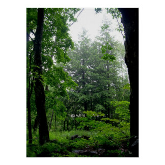 Green Forest Summer Photography Poster