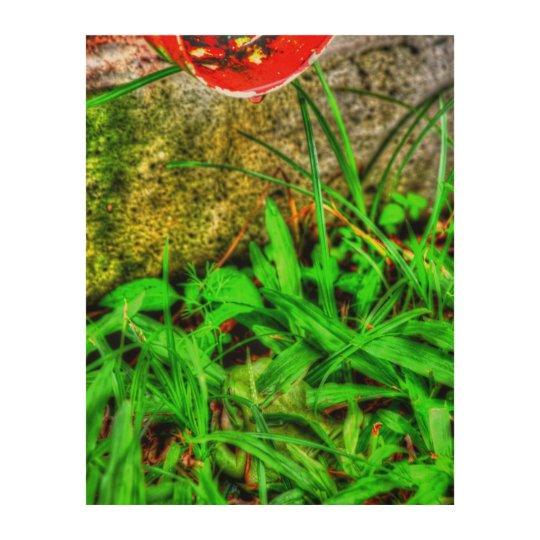 GREEN FROG HIDING IN GRASS AUSTRALIA ART EFFECTS