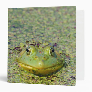 Green frog in duckweed, Canada 3 Ring Binder