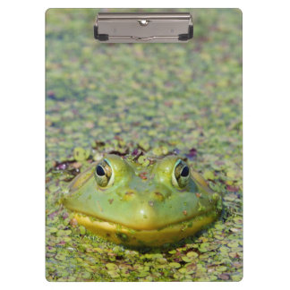 Green frog in duckweed, Canada Clipboard
