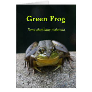 Green Frog Notecard Note Card