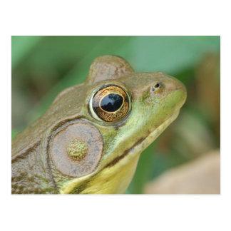 Green Frog Postcard. Postcard