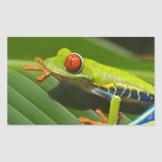 Green Frog Sticker