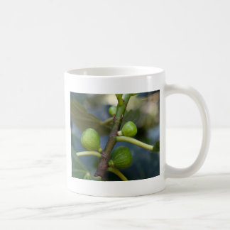 Green fruits of a common fig  tree coffee mug