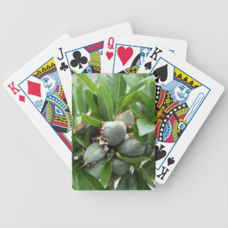 Green fruits of an almond tree bicycle playing cards