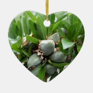 Green fruits of an almond tree ceramic heart ornament