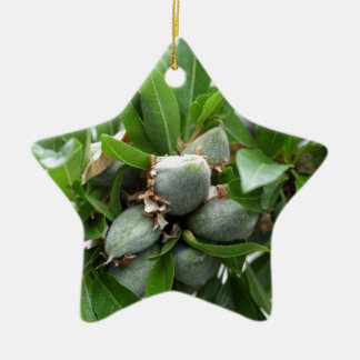 Green fruits of an almond tree ceramic star ornament