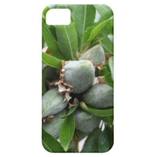 Green fruits of an almond tree iPhone 5 covers