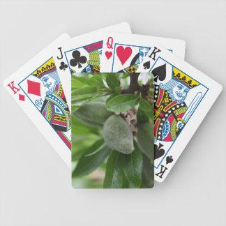 Green fruits of an almond tree poker deck