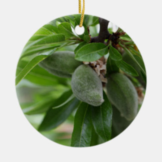 Green fruits of an almond tree round ceramic ornament