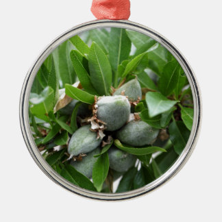 Green fruits of an almond tree Silver-Colored round ornament