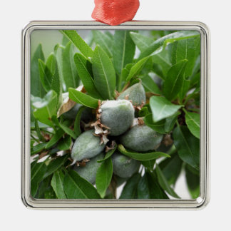 Green fruits of an almond tree Silver-Colored square ornament