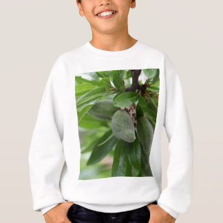 Green fruits of an almond tree sweatshirt