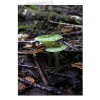 green fungi note card