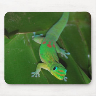 Green Gecko in Hawaii Mouse Pad