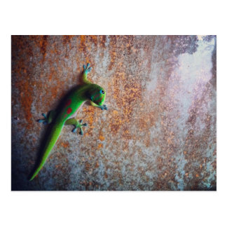 Green Gecko Postcard