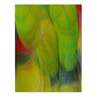 Green Headed Parrot Vertical Postcard