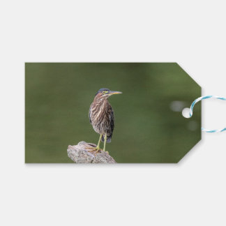 Green Heron on a log Gift Tags