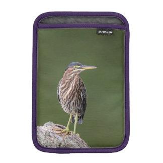 Green Heron on a log iPad Mini Sleeve