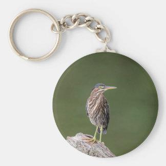Green Heron on a log Keychain