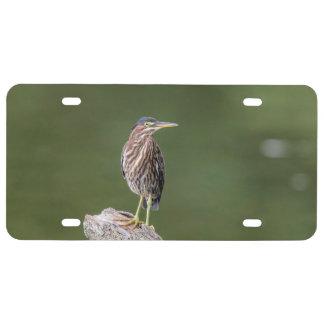 Green Heron on a log License Plate
