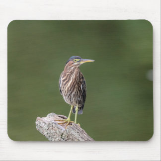 Green Heron on a log Mouse Pad