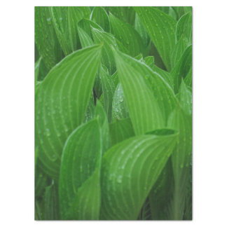 Green Hosta Leaves with Raindrops Tissue Paper