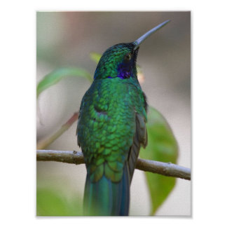 Green Humming Bird Poster