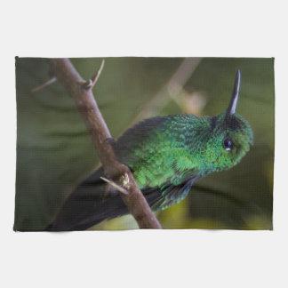 Green hummingbird Costa Rica Kitchen Towel