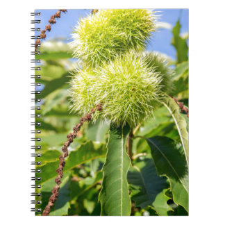 Green husks and leaves of sweet chestnut tree notebook