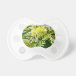 Green husks and leaves of sweet chestnut tree pacifier