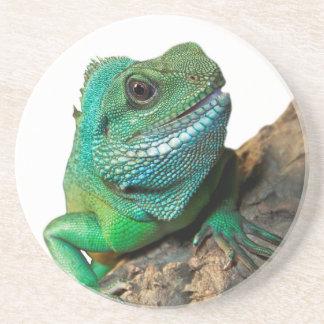 Green iguana coaster
