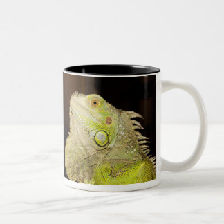 Green Iguana(Iguana Iguana) Two-Tone Coffee Mug