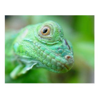 Green Iguana Lizard Reptile On Leaf Postcard