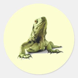 Green Iguana Stickers