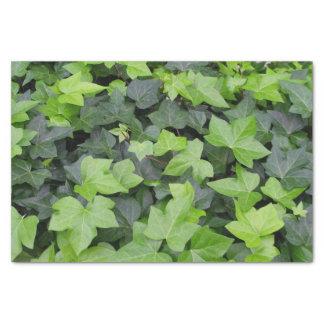 Green Ivy Botanical Print Tissue Paper